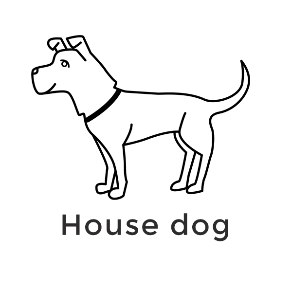 icon-nine-web-square-dog.jpg