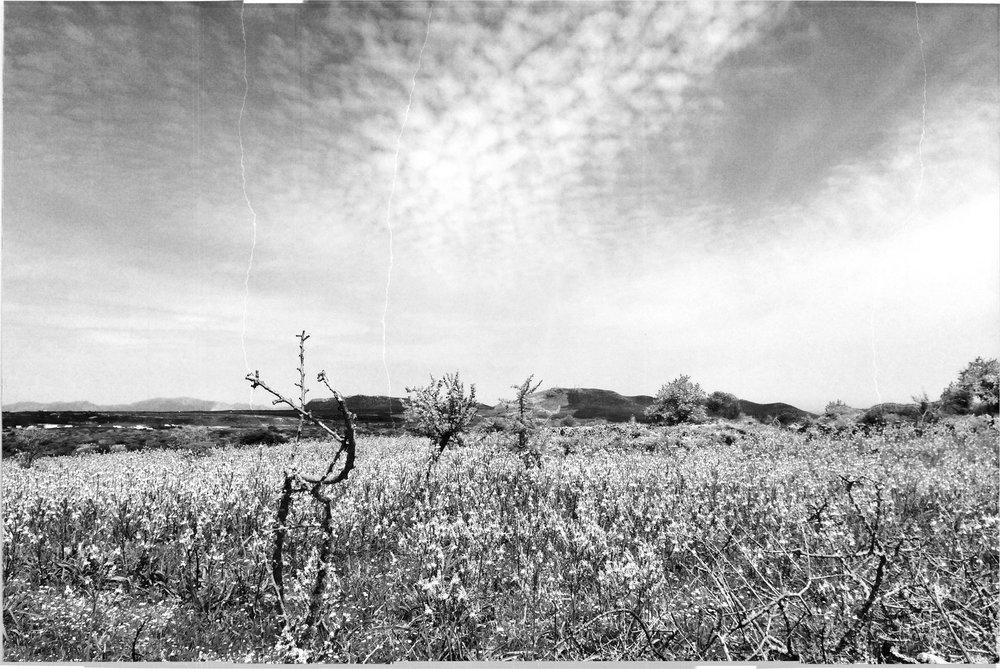 distant-fields-web.jpg