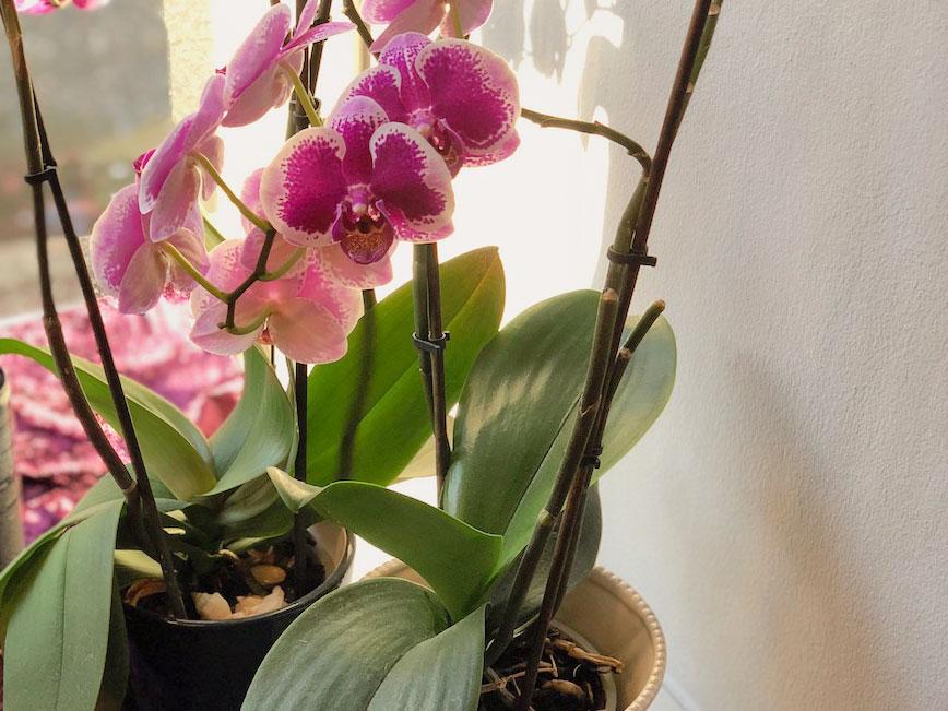 Orkide-2.jpg