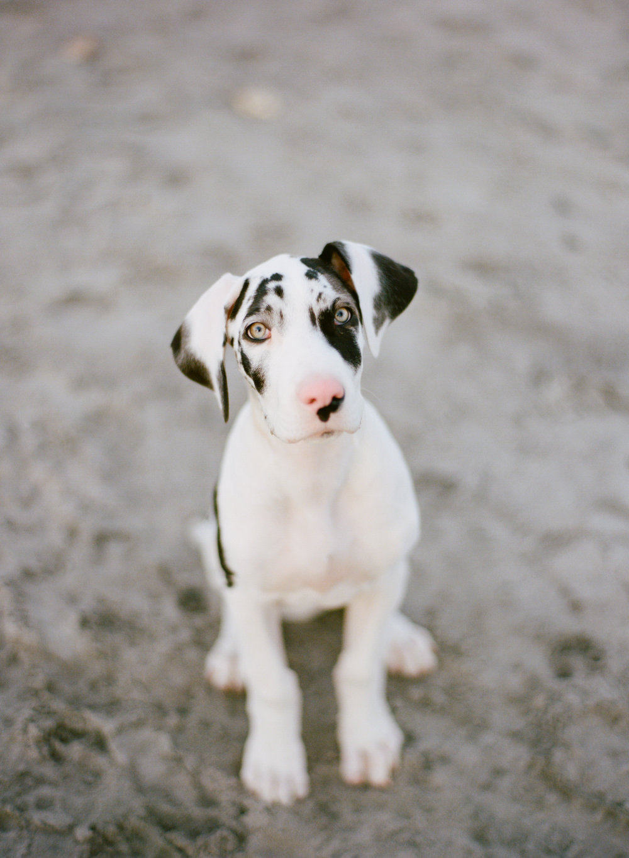 IRMA_puppy_00013.jpg