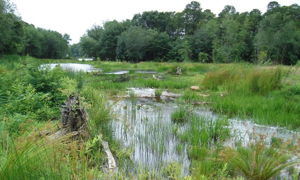 North Grays Bog Wetland Restoration
