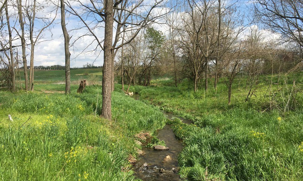 Haines Branch Mitigation, Stream & Ecological Restoration