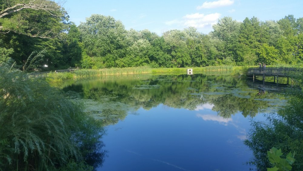 Friends Park Pond Rehabilitation