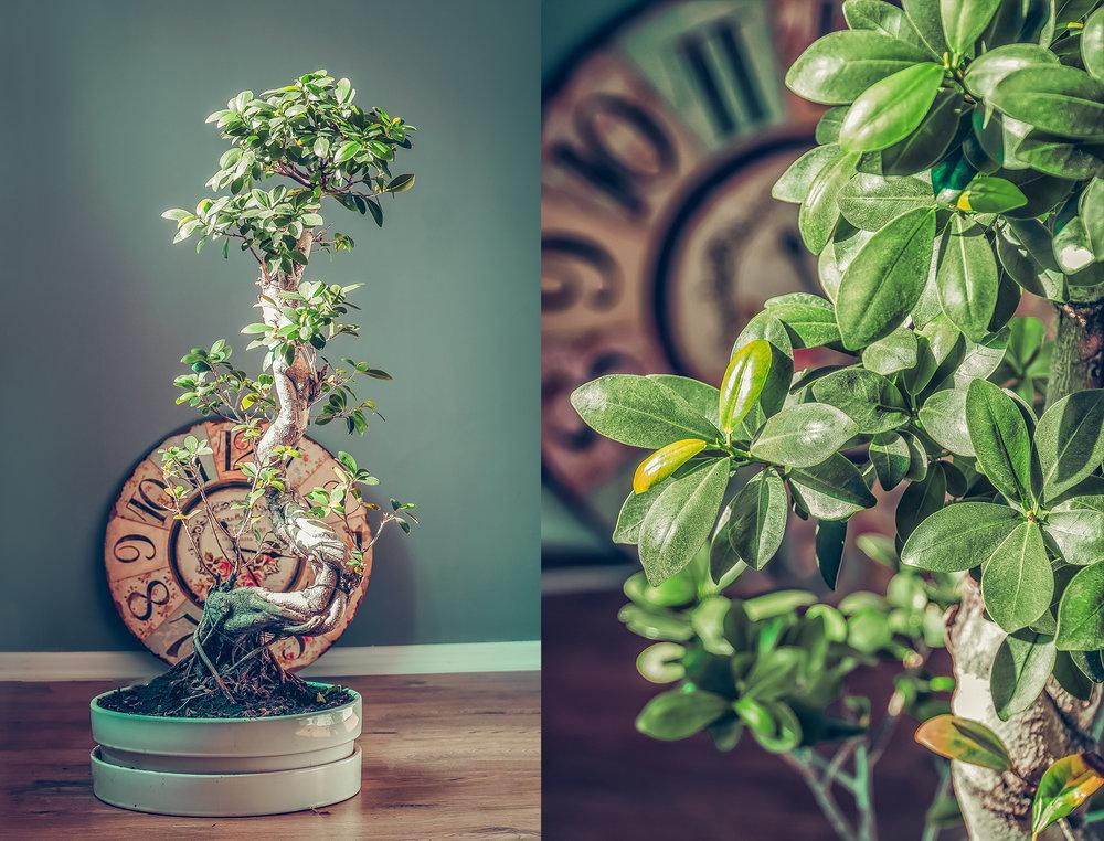 bonsai-ul visător - Pentru că cred în energia pozitivăce ne înconjoară...