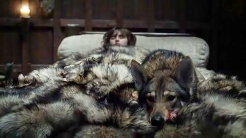 Bran Stark and his 'direwolf' Summer, in Game of Thrones. The direwolves in the TV show are actually Northern Inuit dogs: the breed is extremely friendly, not aggressive and will submit if challenged.