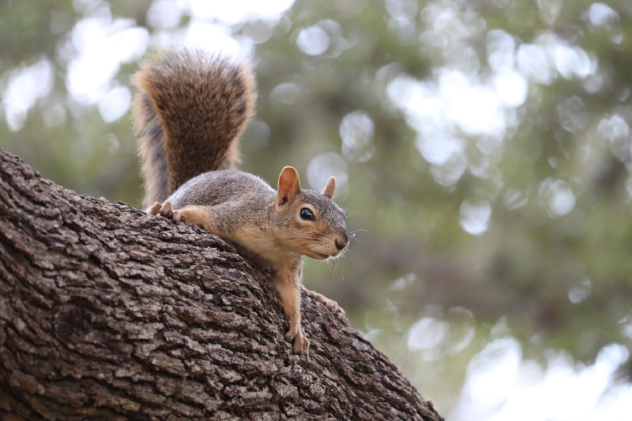 squirrel-3703312_1920.jpg