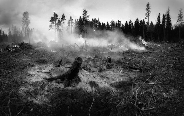 the-forest-fell-2370996_640.jpg