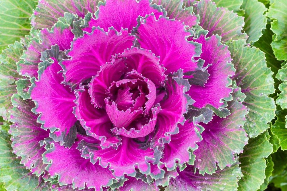 purpleveg-1024x682.jpg