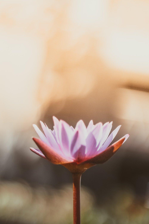 change lotus