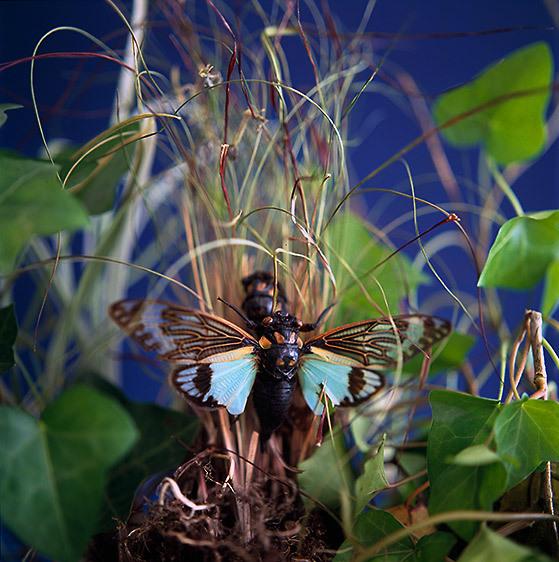 57_1Laura_Farrell_Flora_and_Fauna_Bugs_sat12.jpg