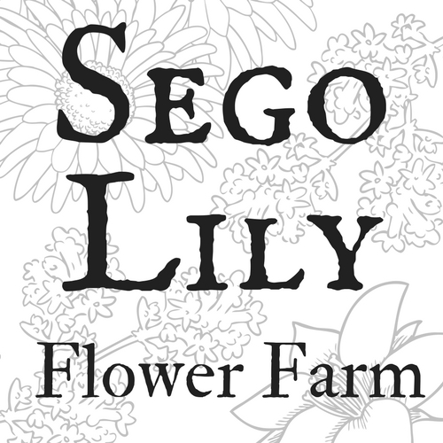 Sego Lily Flower Farm