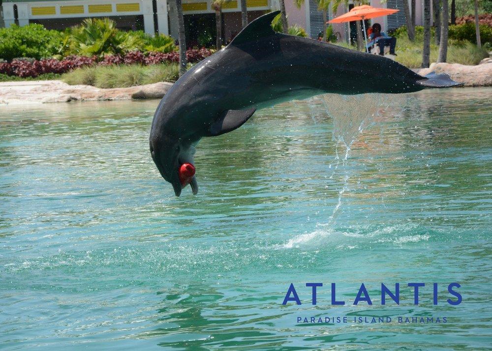 dolphin fetch.jpg