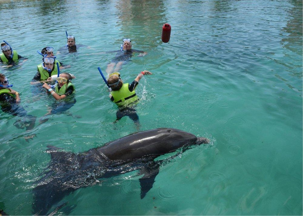 hallie dolphin fetch.jpg