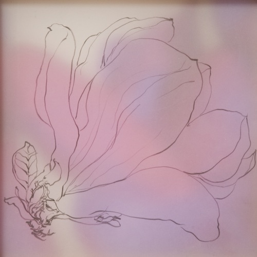 magnolia - purple    pencil, drafting film, photograph     2009