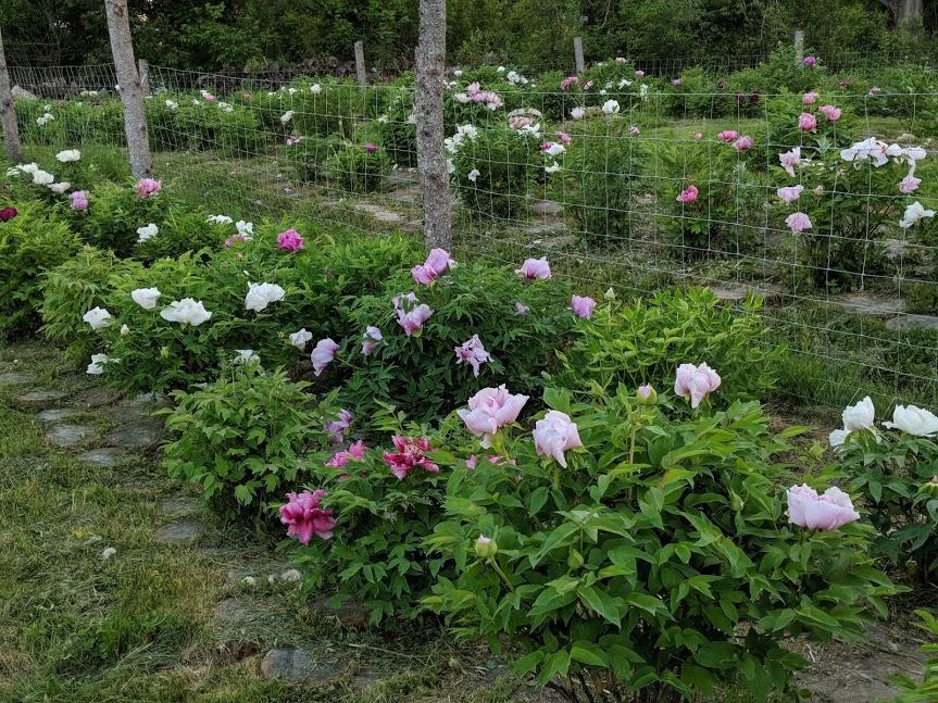seedlings landscape shot.jpg