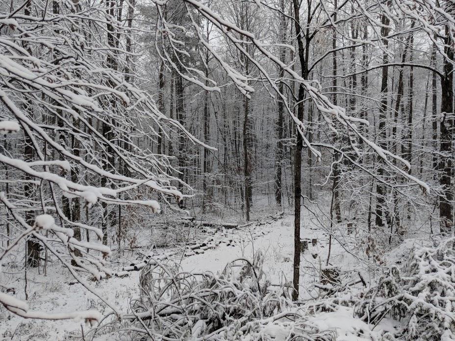 snowy scene 1.jpg