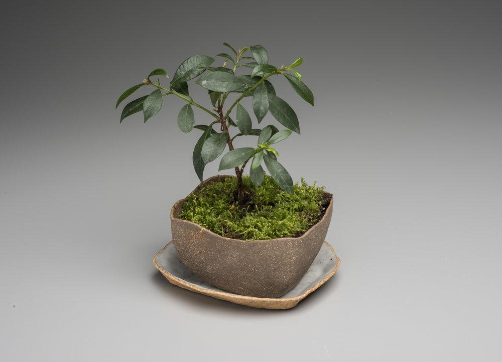 Miniature Garden 5.jpg