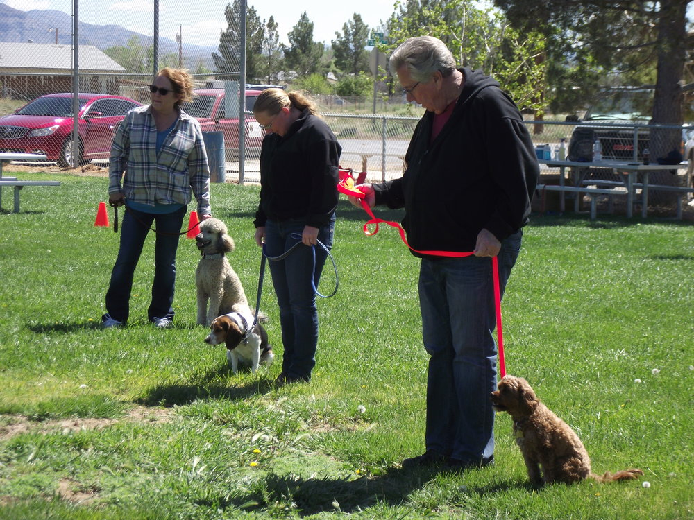 Group class dogs at Sit/Stay position