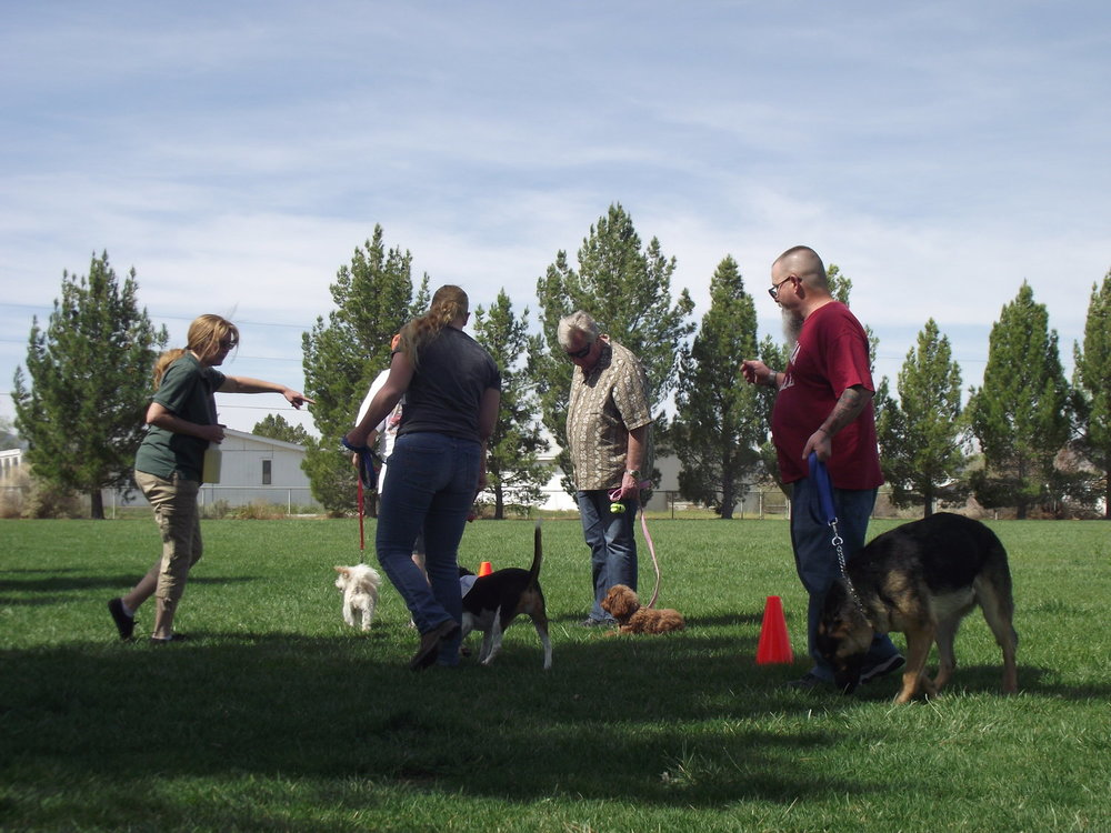 WELCOME TO GOLDSTAR SERVICE DOG CENTER - Your one-stop company for registrations, training, supplies or service dogs.