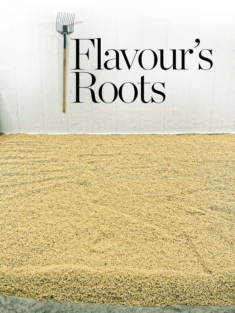 Flavours roots.jpg