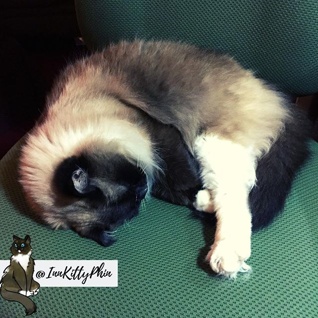 Hoo-manz tiz a good day for a good sleepz.⠀ 😴😴😴😴😴⠀ ⠀ @cohoinnvermont #innkitty #innkittyphin #worldsleepday #sleepday #nationalsleepday #sleepingkitty #sleepingcat #sleepycat