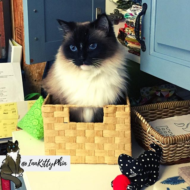 Hoo-manz I am super floofs and cute in my basket.  All places are mine sleeping spaces. ⠀ ⠀ Haz a good day...⠀ @cohoinnvermont #innkitty #innkittyphin #floofykitty #catbasket #basketcat #kittyinbasket #basketlove