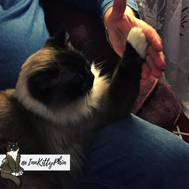 Hoo-manz I enjoy giving the high-fives for I tis the mightest of the floofy things.  My hoo-manz owners also seem to enjoy...⠀ ⠀ Good Day ..⠀ 🙌👏👐👋🤙⠀ ⠀ @cohoinnvermont #innkitty #innkittyphin #caturday #catsaturday #weekendcat #cathighfive #highfive #highfivepet #highfivingcat