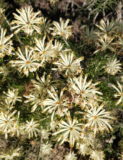 flowers gaby.png