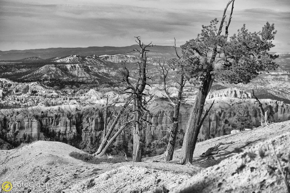 Bryce-Canyon_193_edit1_fb.jpg
