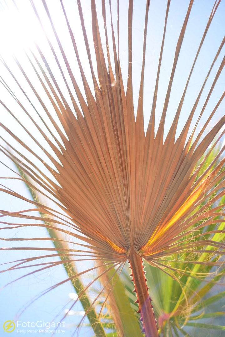 Malaga-Asanas_207_fb.jpg