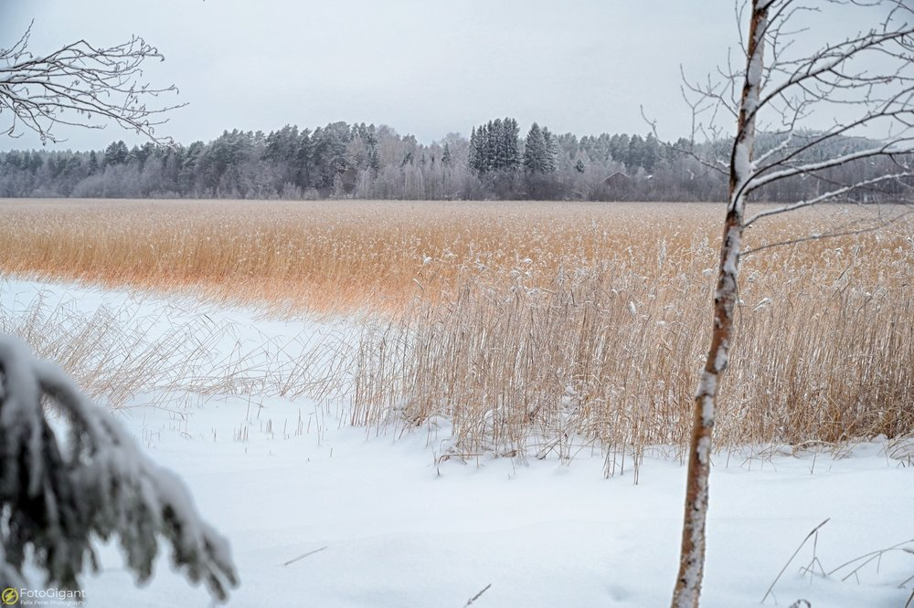 Finland-Photography_02.jpg