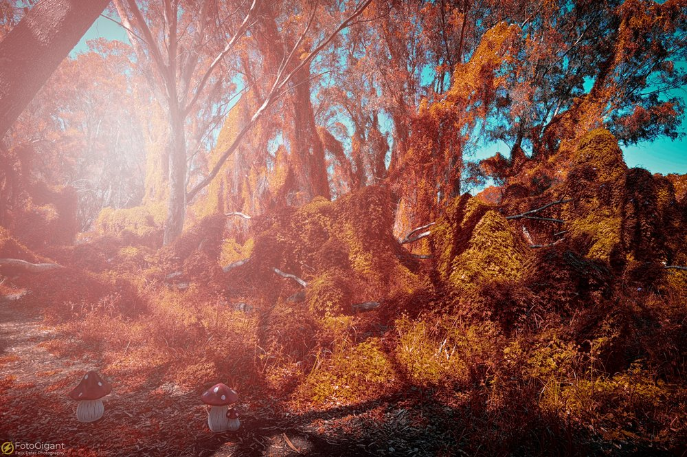 Shelleys-Fantasyworld_10.jpg