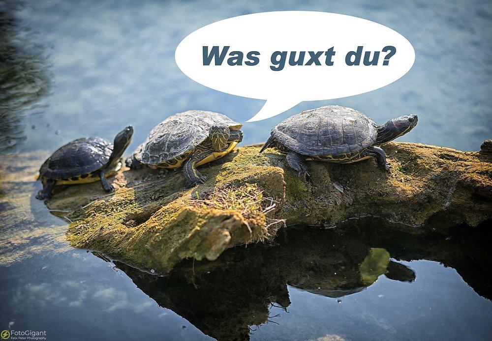 Tierfotografie_Zoo-Basel_16.jpg