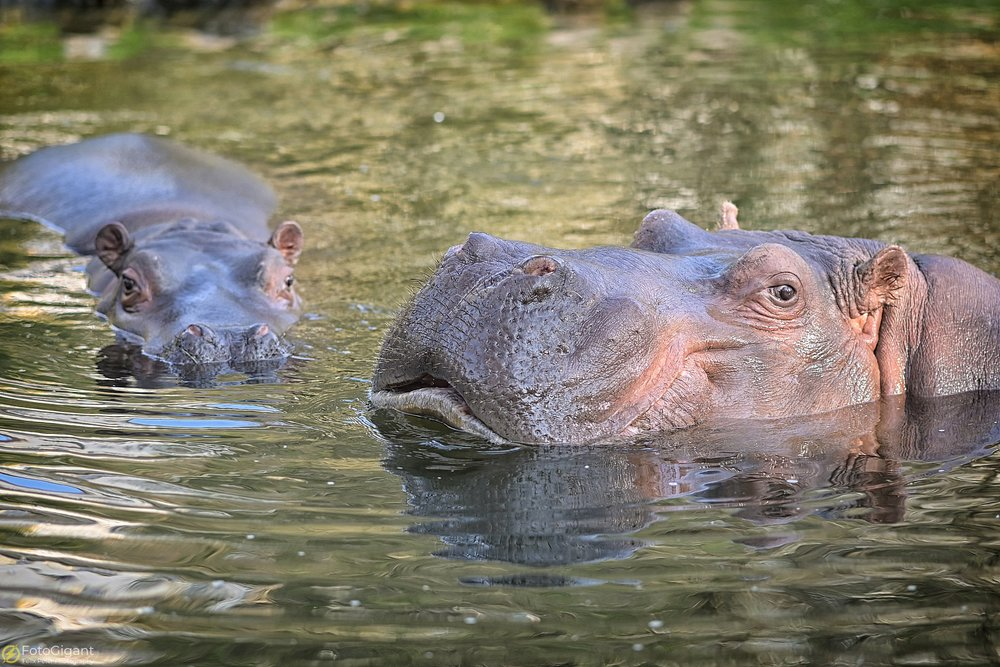 Tierfotografie_Zoo-Basel_01.jpg