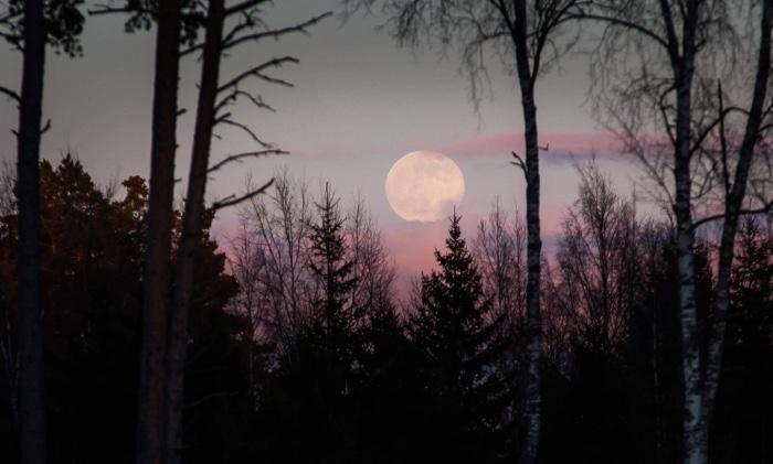 Foto: Kim Lindström  www.kim.ax