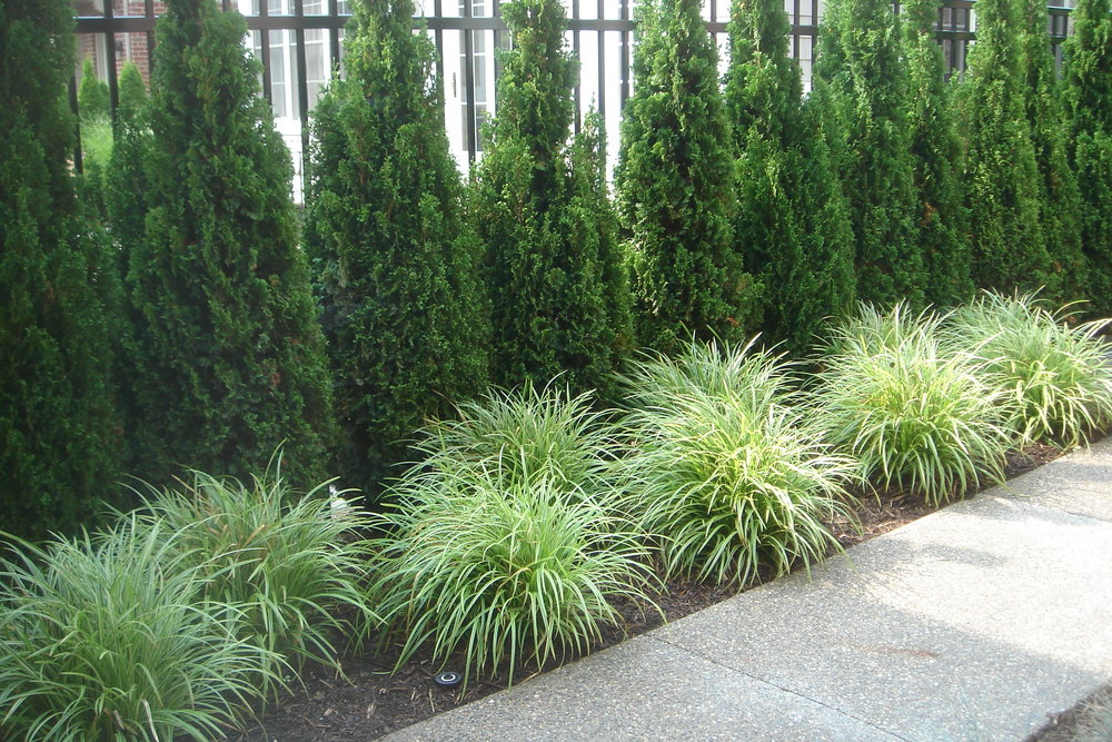 Plantings in Pleasant Ridge, MI, Metro Detroit