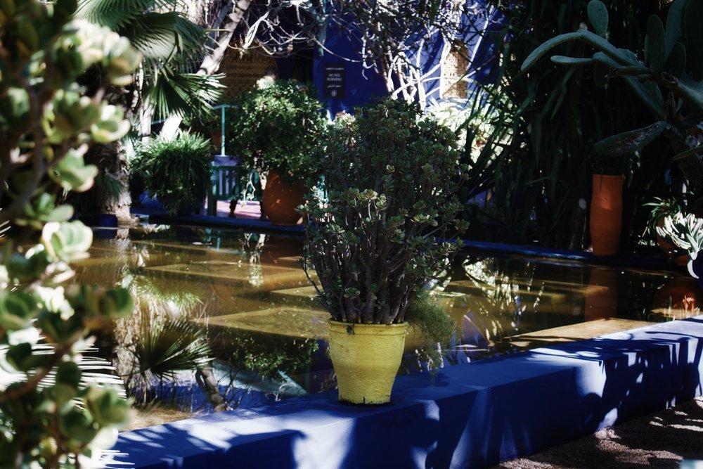 jardin majorelle marrakech-9.jpg