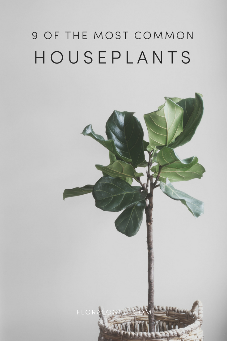 most common houseplants.png