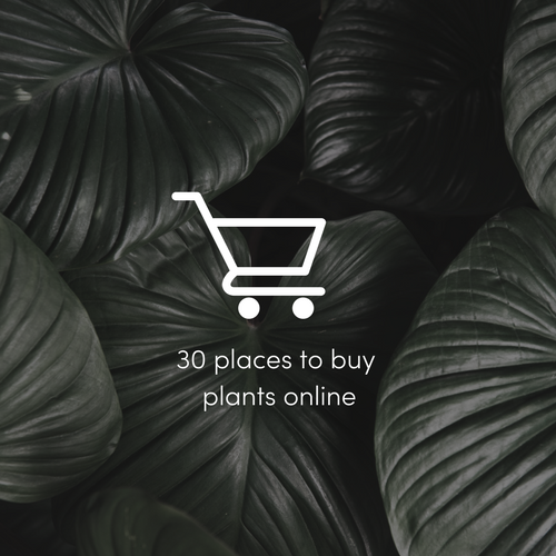 30 places to buy indoor plants online.png