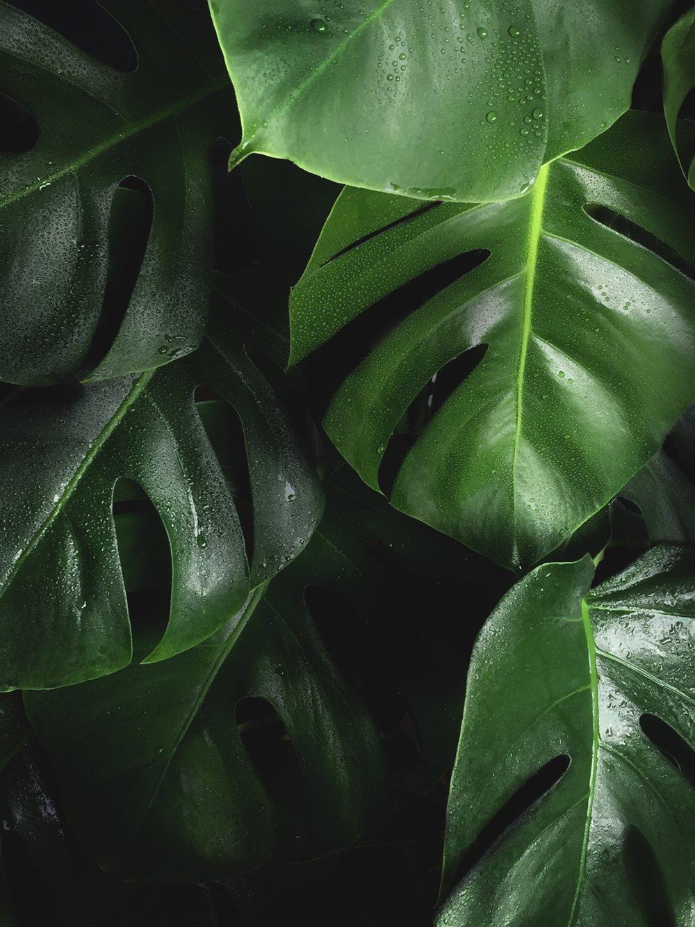 lush foliage plant.jpg