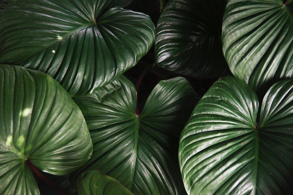 lush green plant foliage .jpg