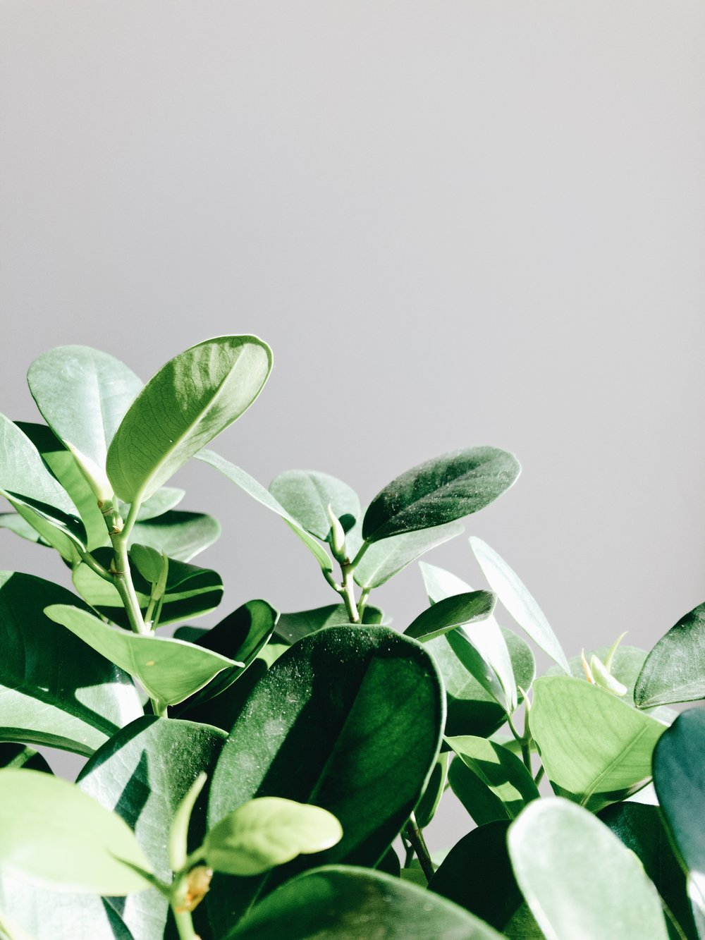 What's wrong with your houseplant? - Here are things to look for so you can troubleshoot the issue.