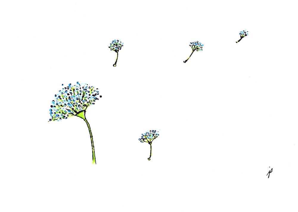 dandelion_jodisam.jpg