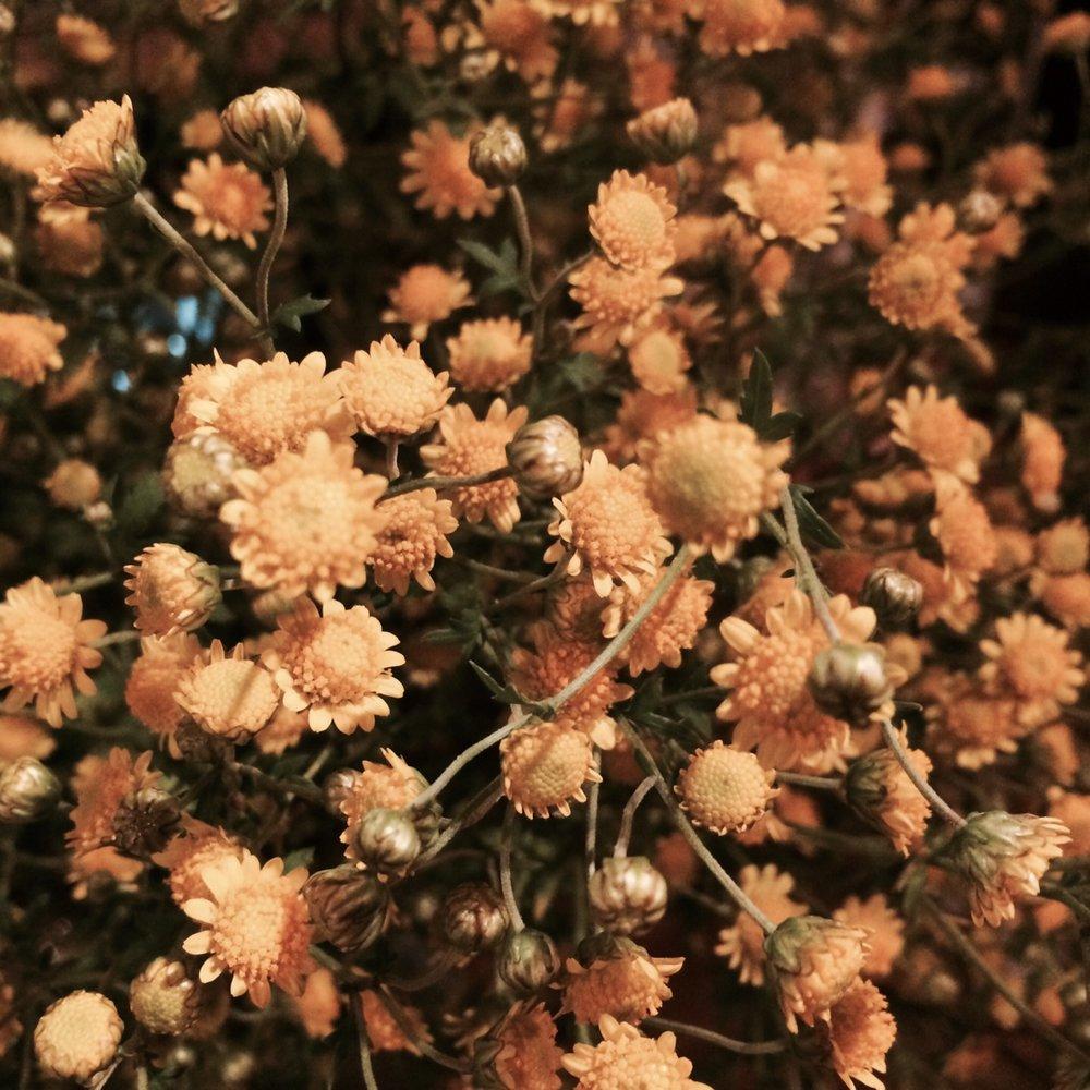 fukushima_flowers_js.jpeg