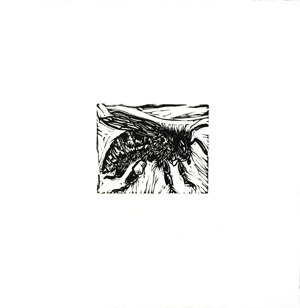 Untitled (Bee I) - Miniature Linocut