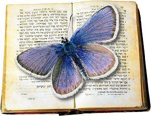 Butterfly_Garden_Logo.jpg