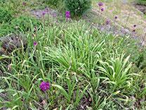 gardenApril-tip-tmb.jpg