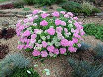 gardenSeptember-tip-tmb.jpg