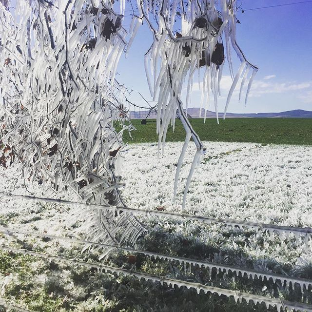 Brrrr! We've had a rather frosty morning here in #Creighton! If you're coming for the #CreightonAloeFestival next weekend, make sure to dress warm! #frostymorning #frostyfarms #winterishere