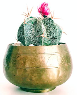 a small succulent plant with pink flower in a brass container taken from the psychotherapy office of Intuitive Healing in New York City.